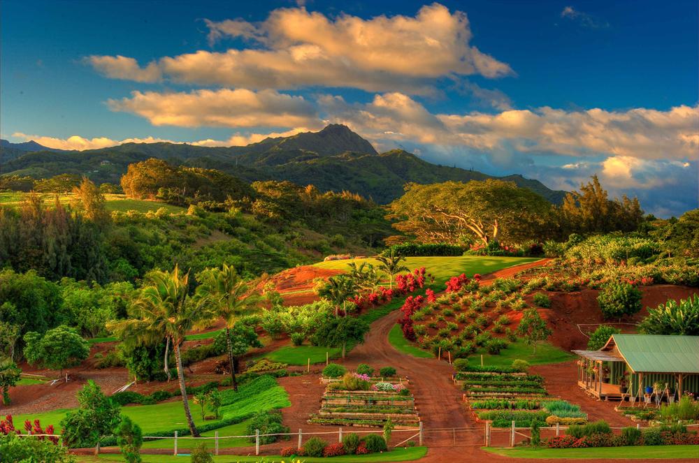 Kukuiula Organic Farm In Kauai