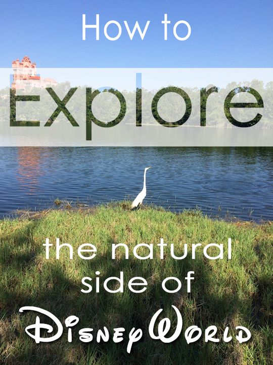 The rides, character experiences and shows are all staples when attending a Disney park, but there is a softer side to Disney where connecting with nature is the main focus!
