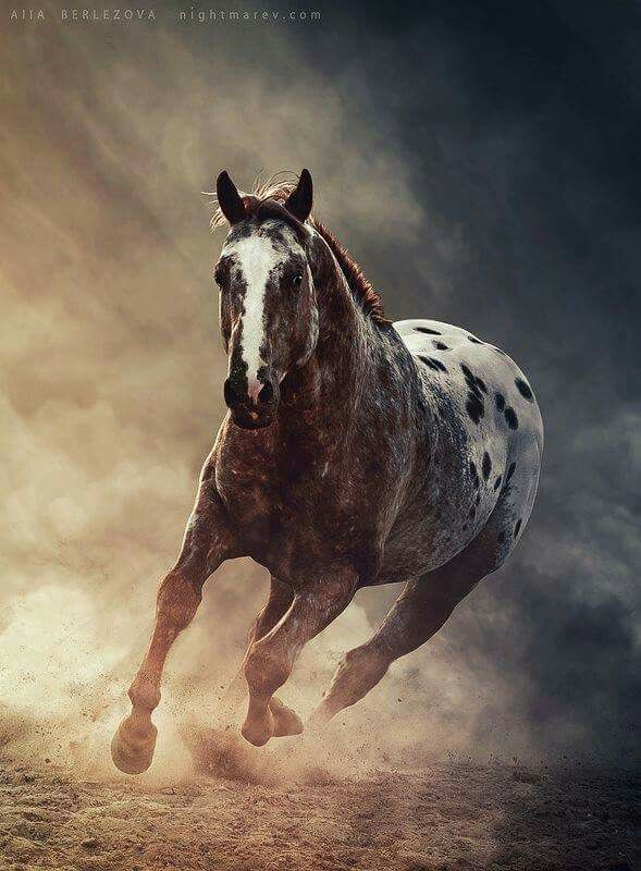Strawberry appaloosa More | Horse crazy | Pinterest | Caballos ...