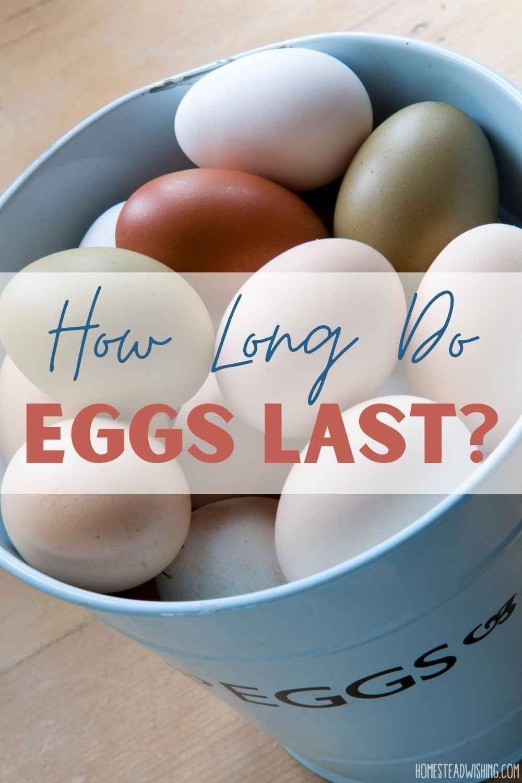 How Long Do Eggs Last Do Eggs Go Bad Rotten Eggs Eggs How To Cook Eggs Backyard Chickens Eggs