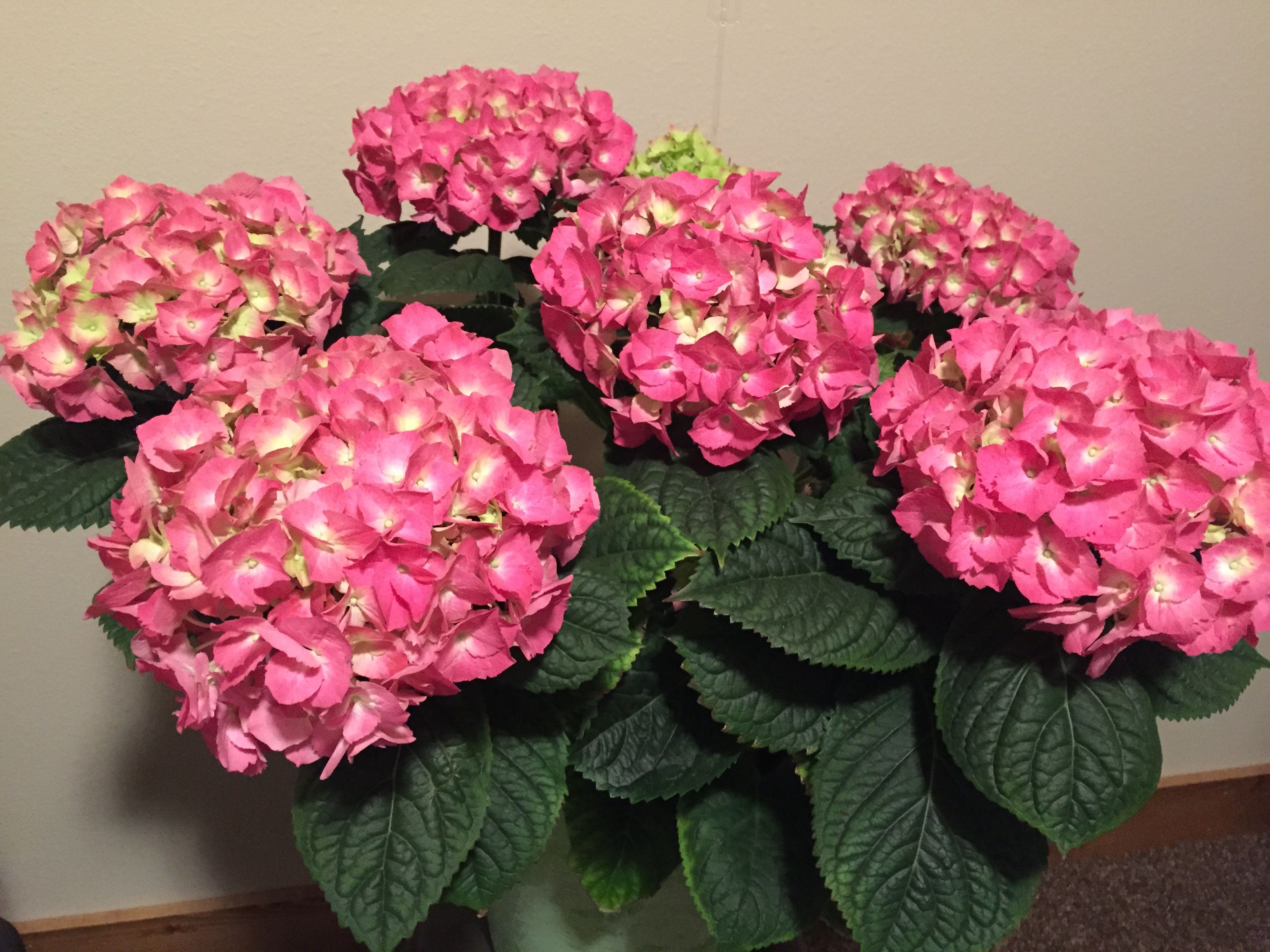 Pin by dianne lindberg on flowers color my world pinterest cauliflower colour flowers nvjuhfo Image collections