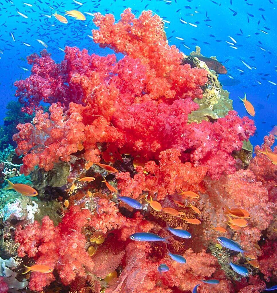 Somo Somo Reef Fiji June-July 2006   Underwater Photography ...