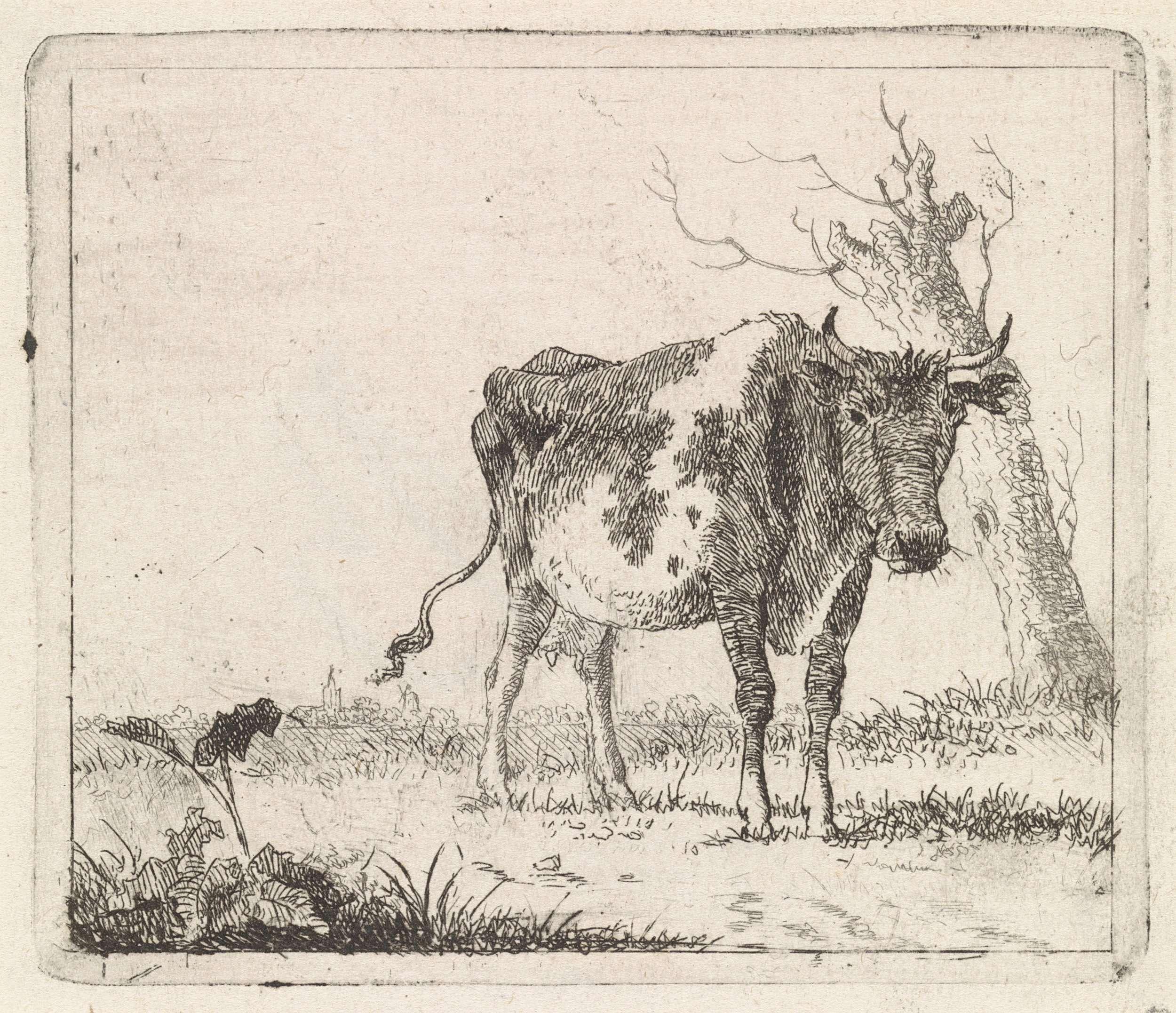Johannes Christiaan Janson   Koe staand in weiland, Johannes Christiaan Janson, 1778 - 1823   Koe staand in weiland, naar rechts. Rechts achter de koe een bladerloze wilg. Links op de achtergrond een dorp.