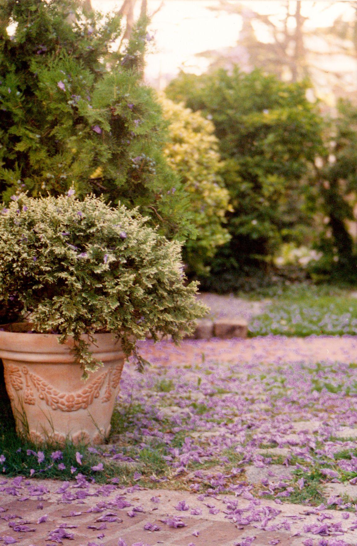 my sweet garden | tuindecoratie | Pinterest | Gardens