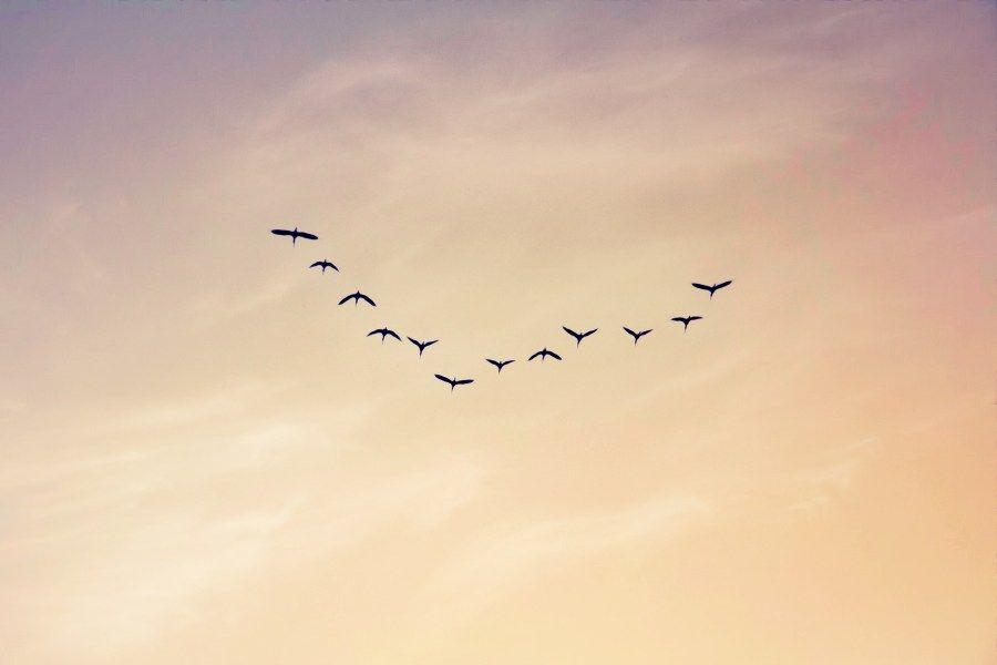 Argentina La Pampa Atardecer Aves Birds Cielo Clouds Nubes