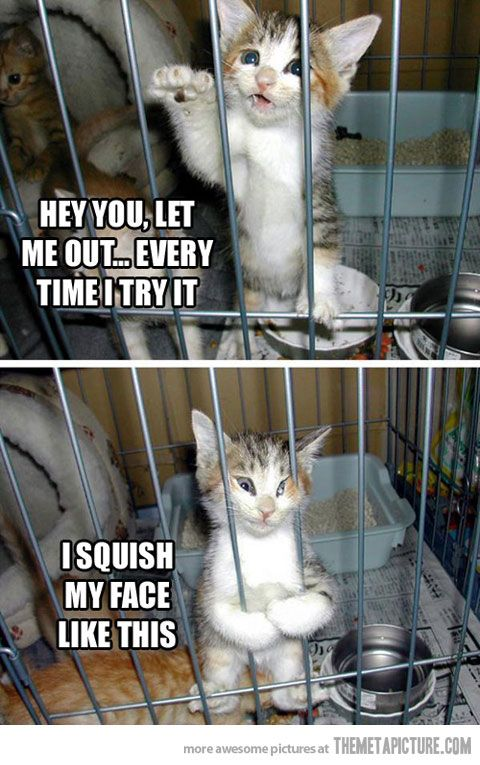 Hey, let me out… Funny animals, Funny captions, Funny
