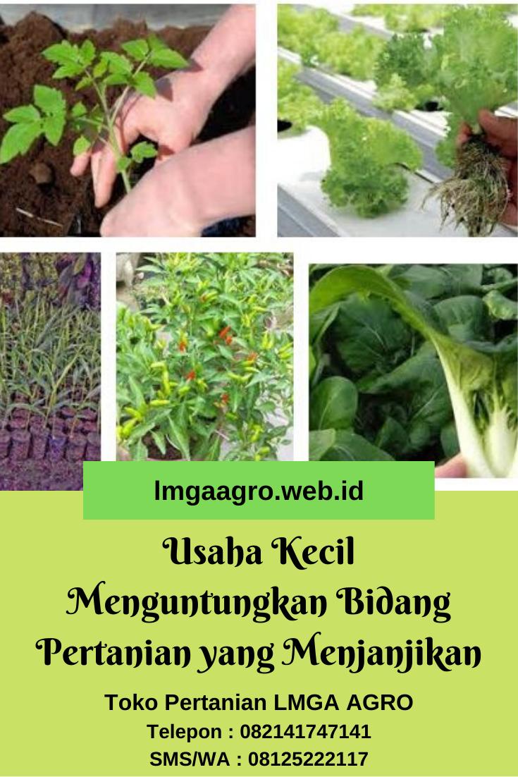Tanaman Kebun Yang Menguntungkan