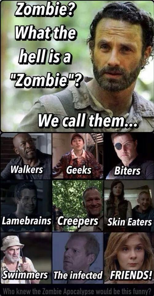 What Are Zombies Walking Dead Funny Walking Dead Quotes