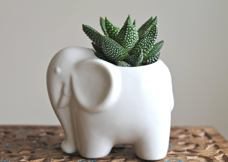 Ceramic Elephant Succulent Planter Mini