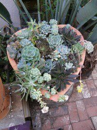 Information on many different succulent types | Succulent ...