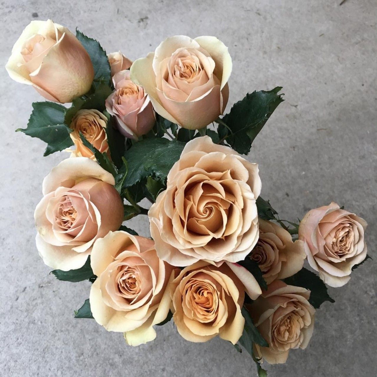 Golden Mustard is a Dutch rose with a tawny hue the color of mustard seeds, which is truly unique and unforgettable. You may notice shades of yellow, gold and even light pink in the petals. She has a medium-sized head and a high centered bloom. Learn more about this variety at (photo by Garden Roses Direct) #goldenmustardroses #gardenroses #rose #flowers #flowersofinstagram #rosesofinstagram #deluxegardenroses