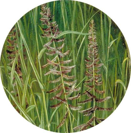A Sacred Grass, Marianne North; c 1878; Oil on board; Collection: Royal Botanic Gardens, Kew, Richmond, Surrey, England