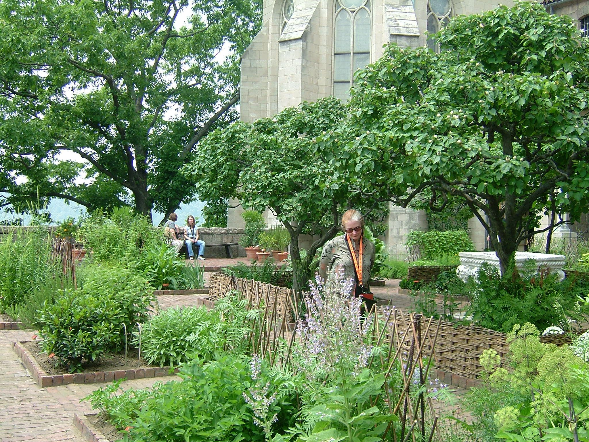 The Cloisters Garden (June 2004) (With images) Botanical