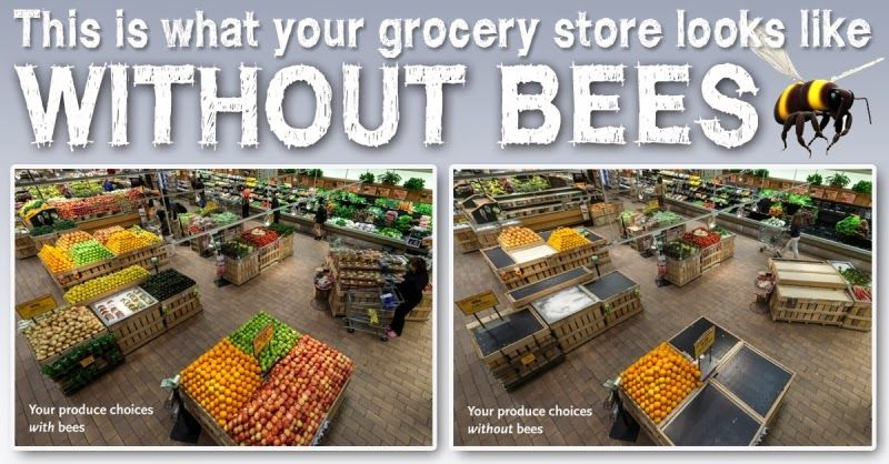 Pin by carolyn kelly on My son, the beekeeper Pinterest - fresh apiary blueprint examples