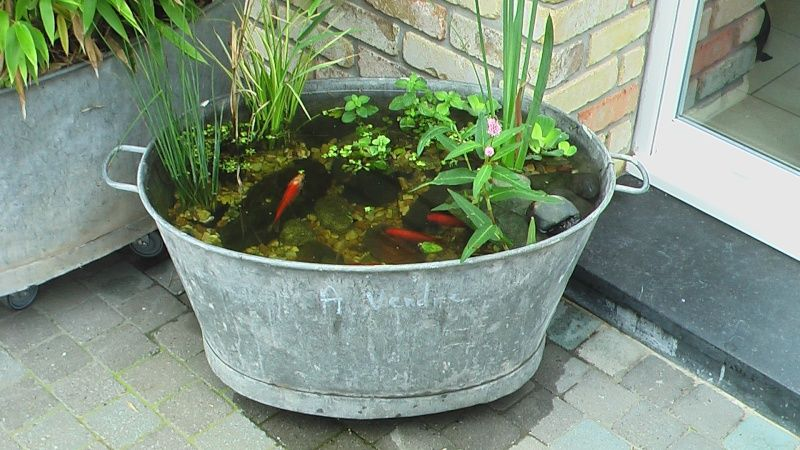 Oval shaped galvanized tub water garden with goldfish for Garden pond tub