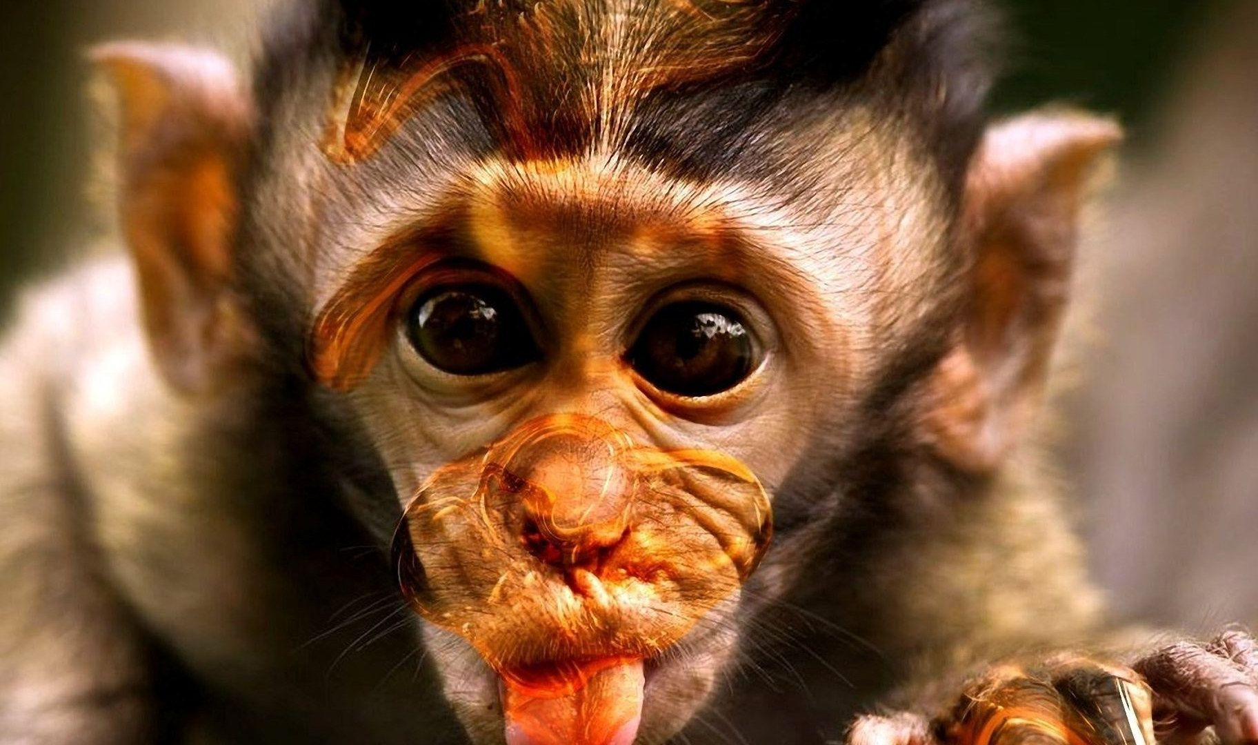 Monkey Wallpaper cartoon monkey wallpaper | hd wallpapers | pinterest | funny