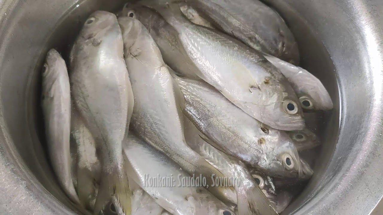 False Trevally Fish Or Saundalo Fish Names In Indian Languages Fish Indian Language Language