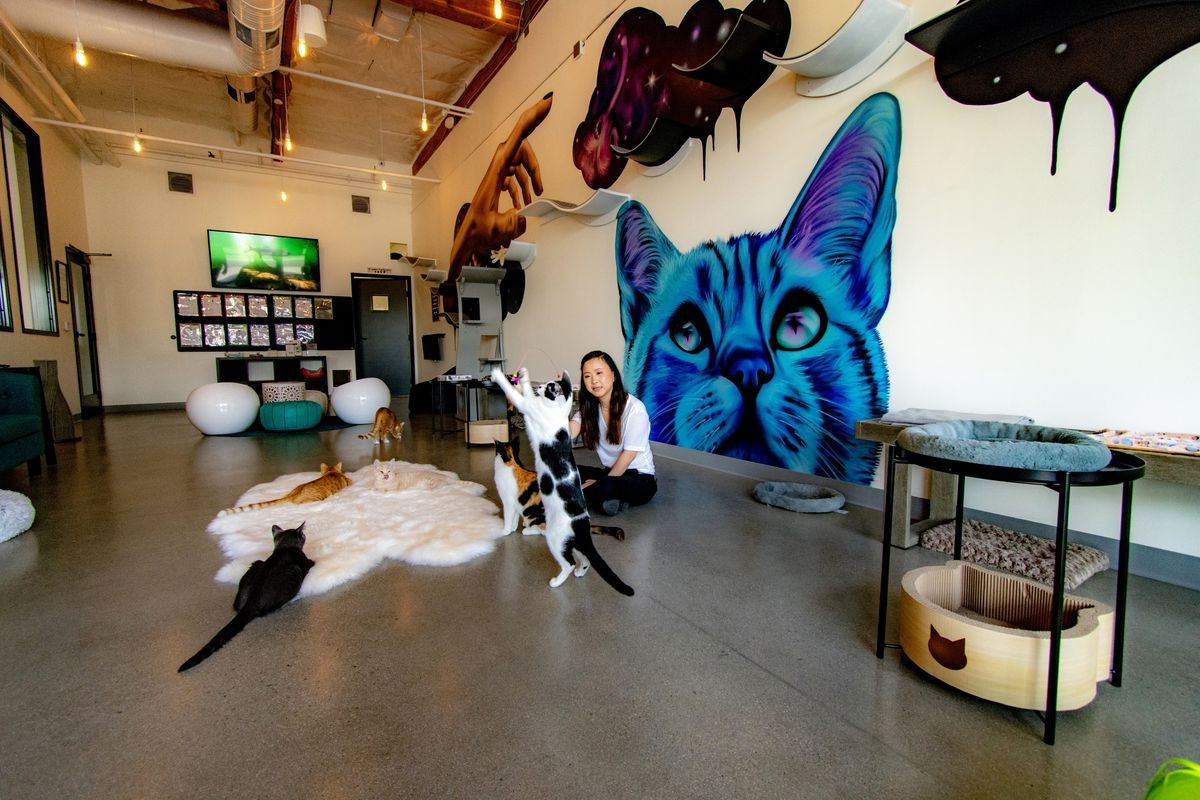 North County S First Cat Cafe Opens This Weekend Cat Cafe Cat Crafts Cats