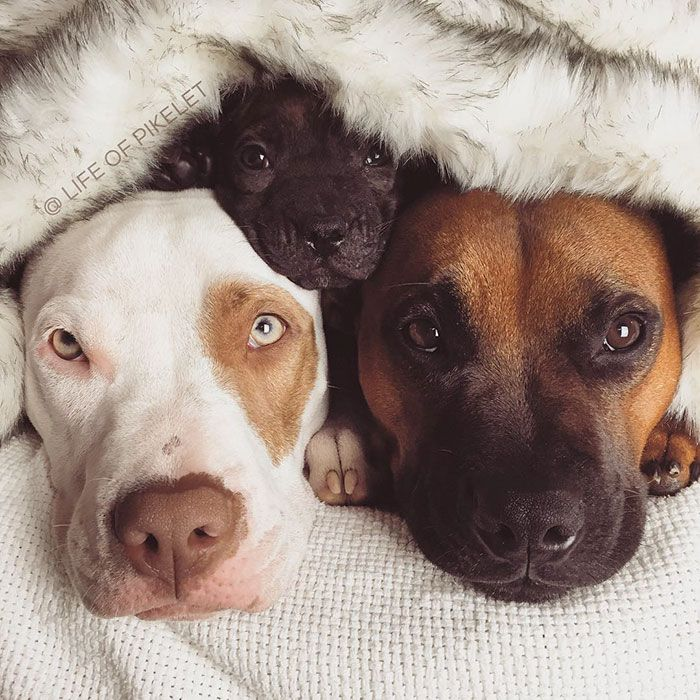 Rescue Dogs Adopt Potato Foster Dog Baby Animals Dogs