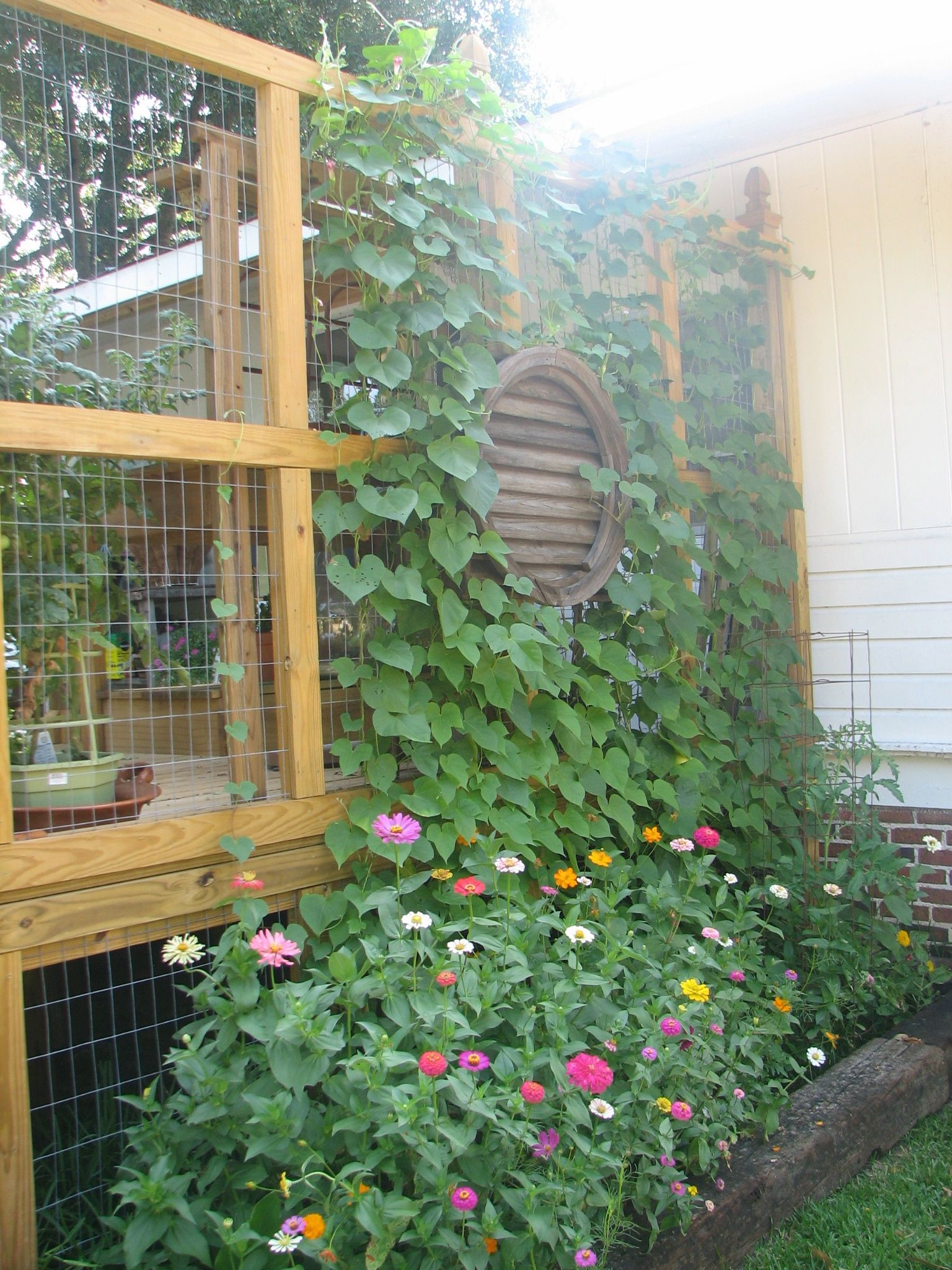 Deck privacy wall with wire screen for plants | Privacy ...