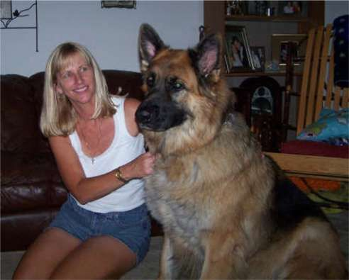 King Shepherd | Big, Giant and Huge Dogs | Pinterest ...