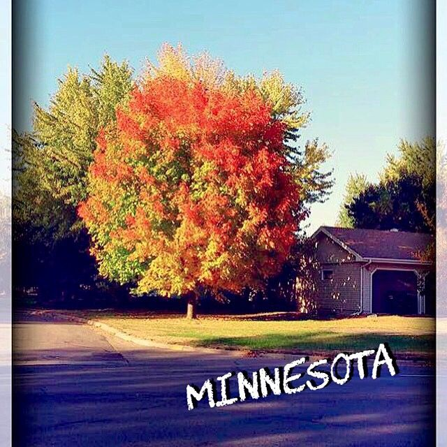 Ah, Minnesota! I miss my old home! Especially during the Fall season!