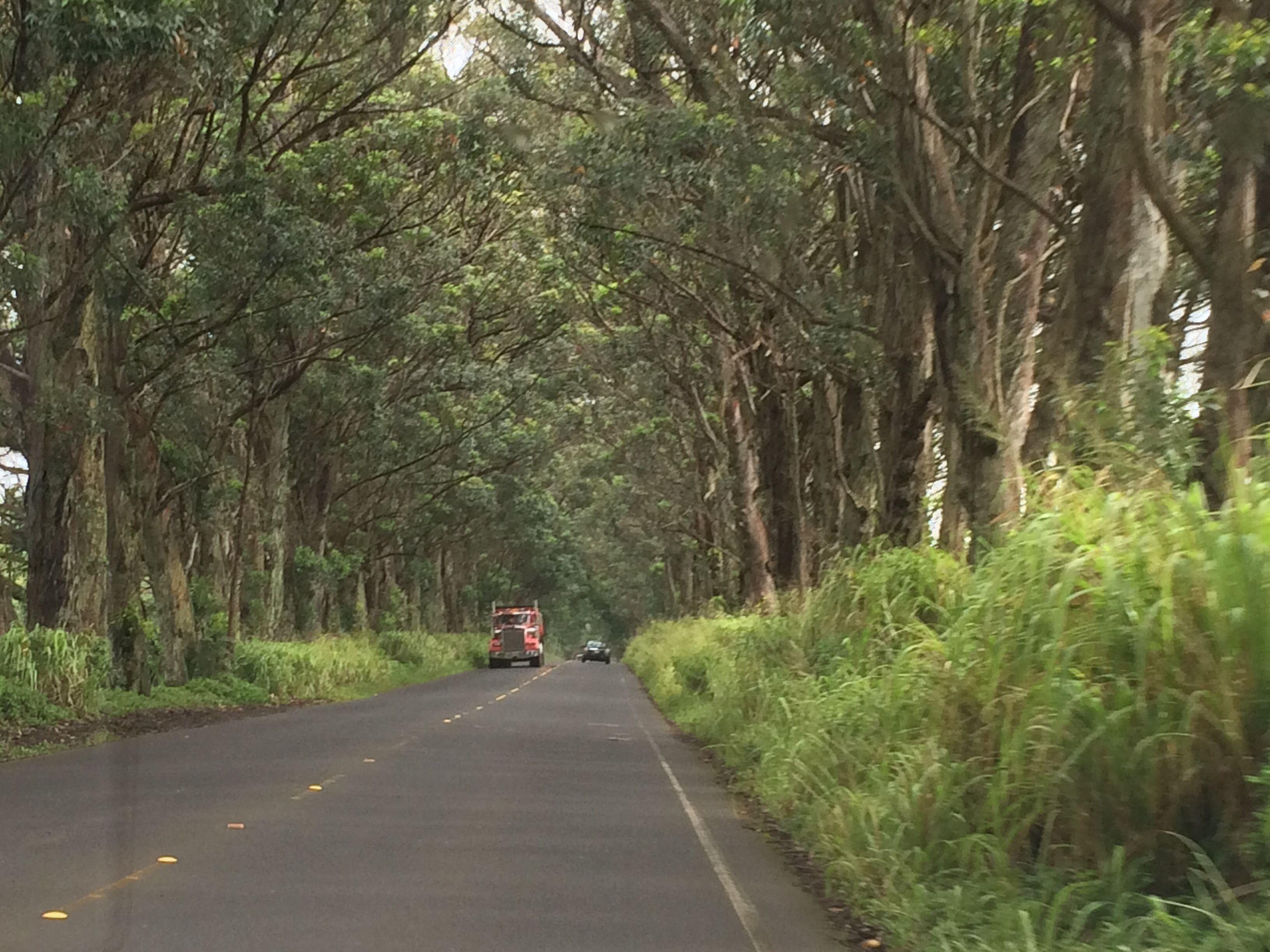 Tunnel of Trees, Kauai | Kauai 2014 | Pinterest