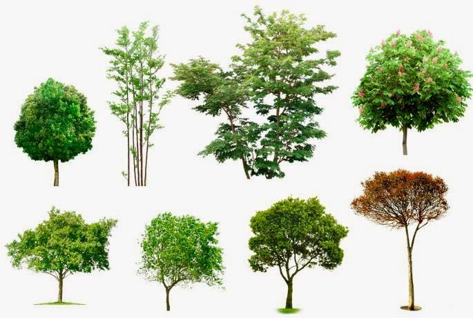 Como Son Los Arbustos