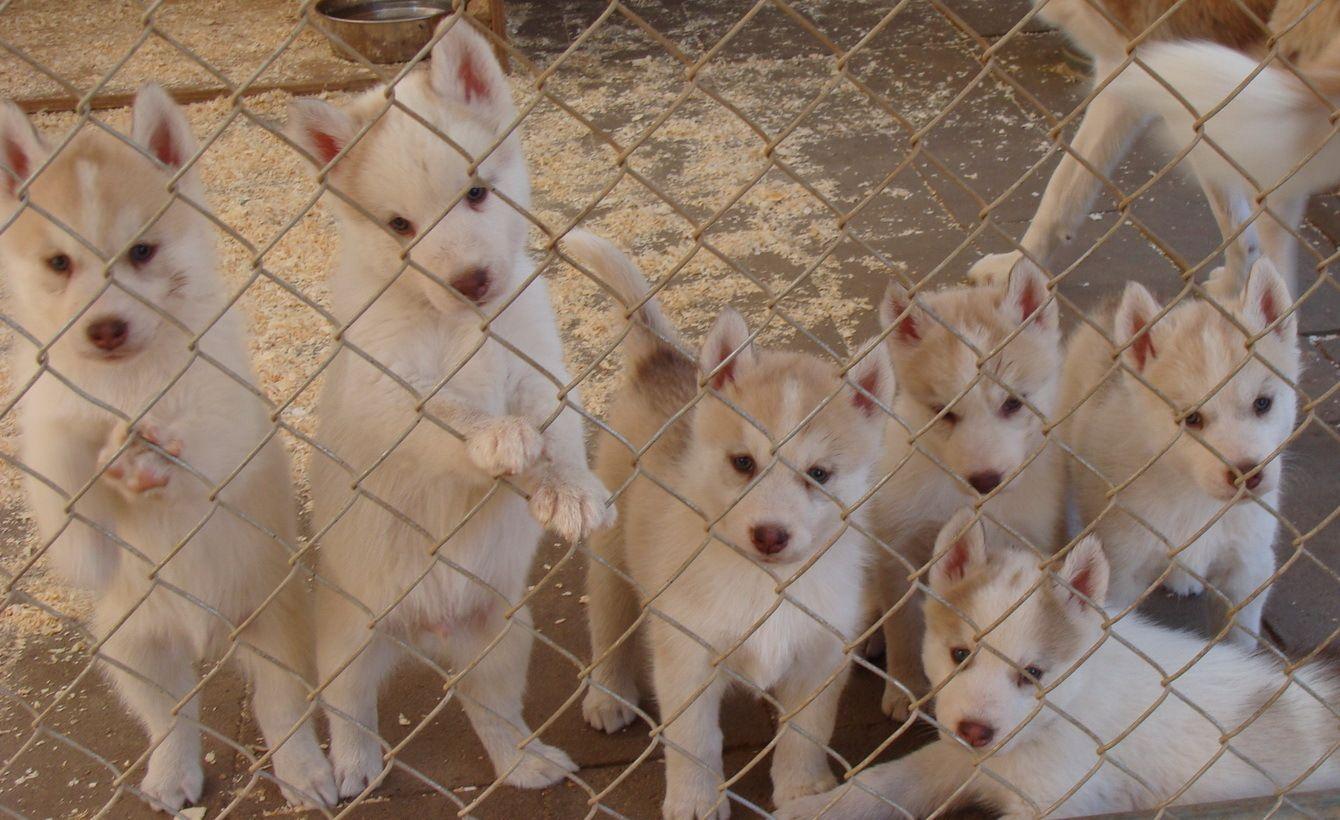 Against Puppy Mills Photo Stop Puppy Mills Puppy Mills Puppies Shiba Inu