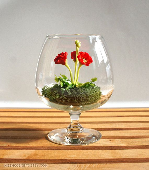Tiny Red Poppy Woodland Terrarium in Brandy Glass by Miss Moss