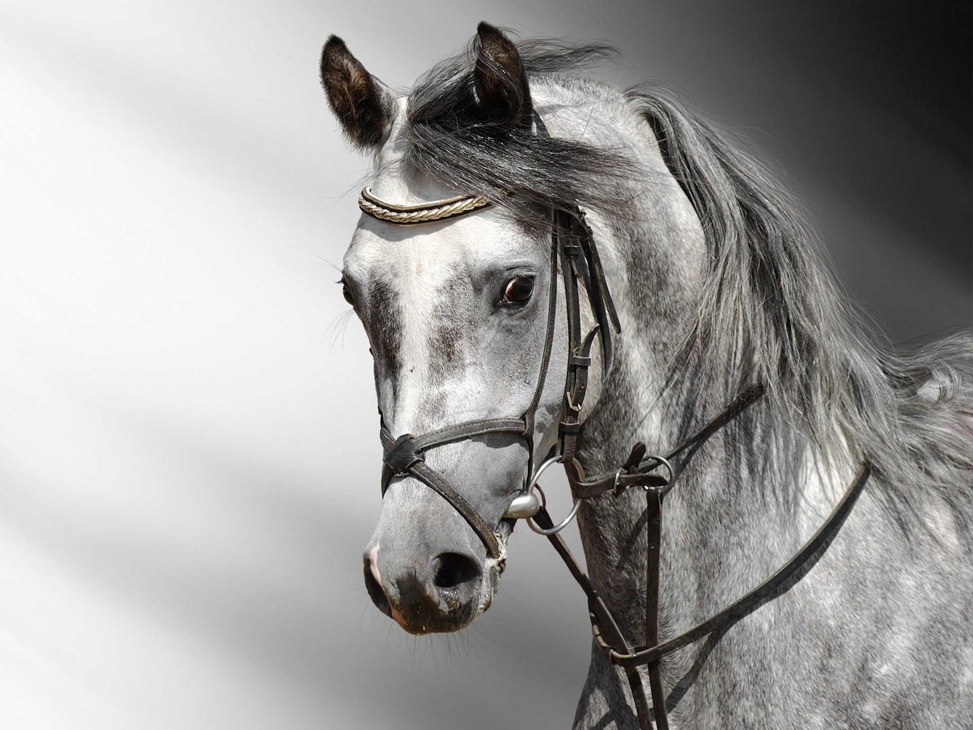 Horse Wallpaper Desktop 5lW Animals Pinterest Horse
