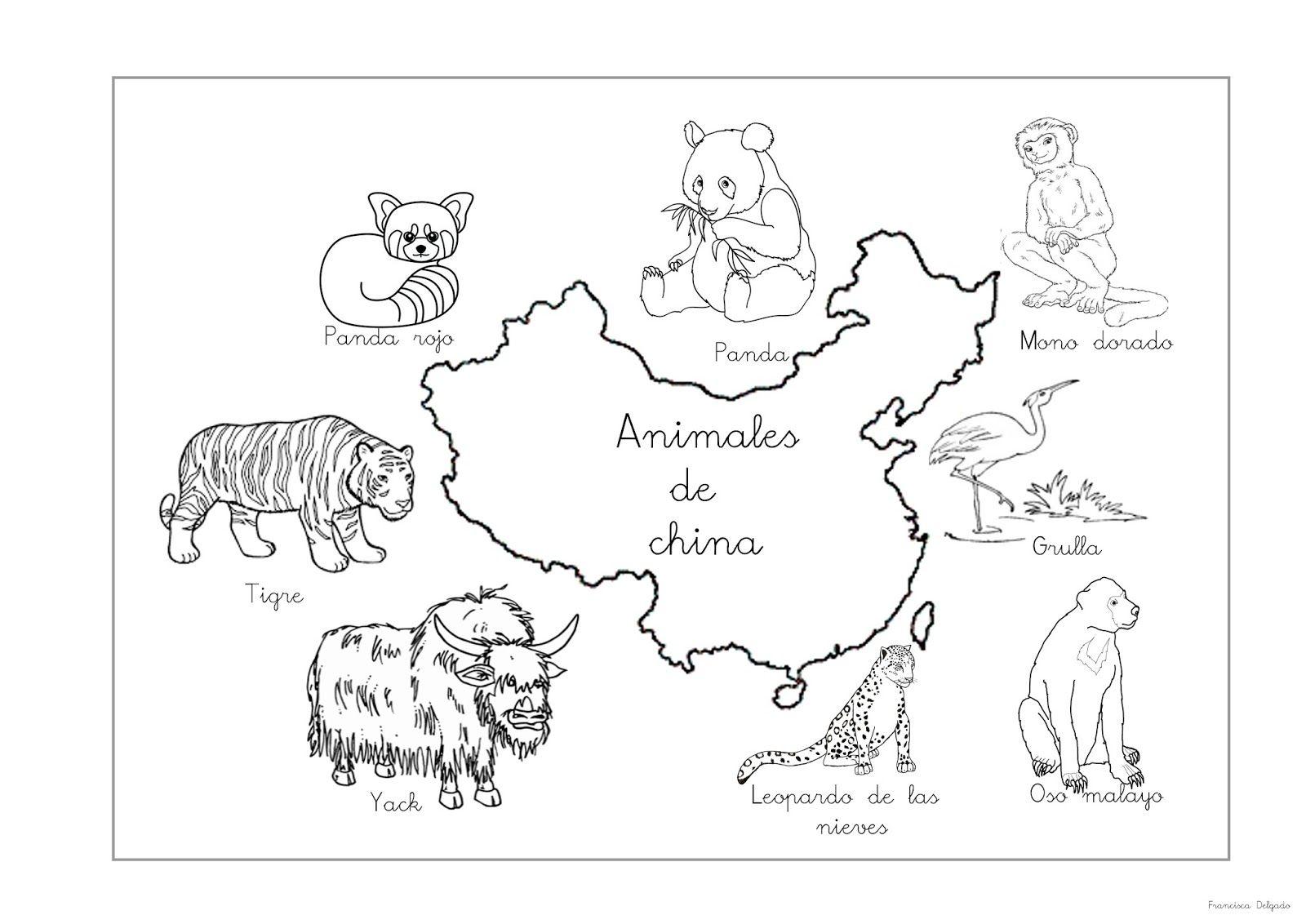 Qué puedo hacer hoy? Coloreo animales | PROYECTO ANIMALARIO ...