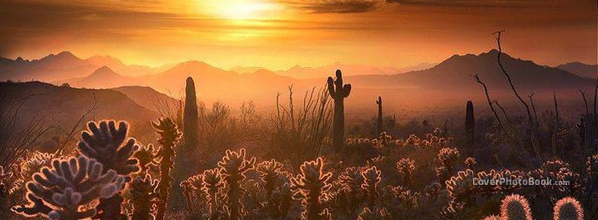Dusty Desert Sunset Cactus Facebook Cover Nature