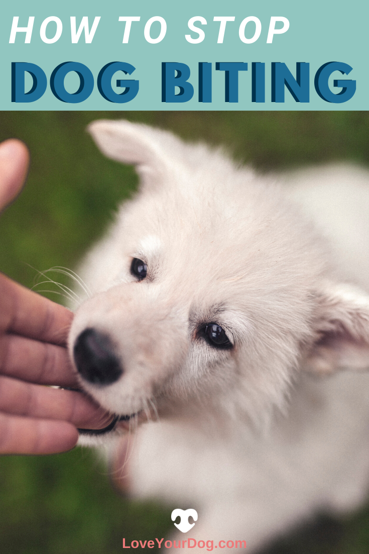 Dog Bites Prevention Tips To Keep Your Family Safe Dogs Puppy