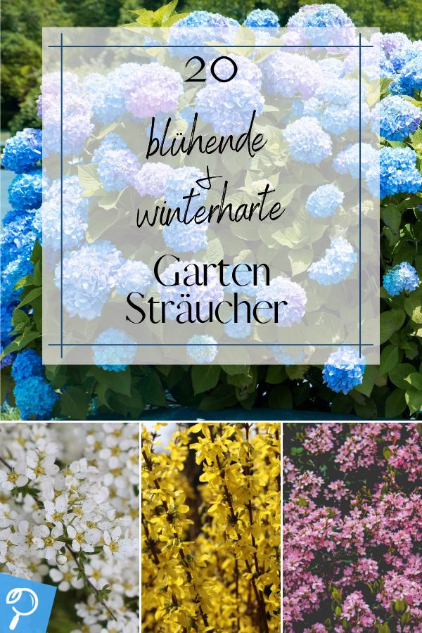Bluhende Garten Straucher 20 Winterharte Busche Fur Sonnige Standorte In 2020 Garten Winterharte Pflanzen Garten Straucher Garten