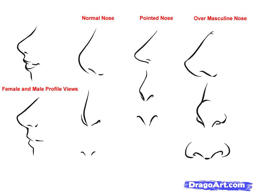 Beginning Tips How To Draw Anime Noses Female 2019 In 2020 Nose Drawing Anime Nose Anime Drawings