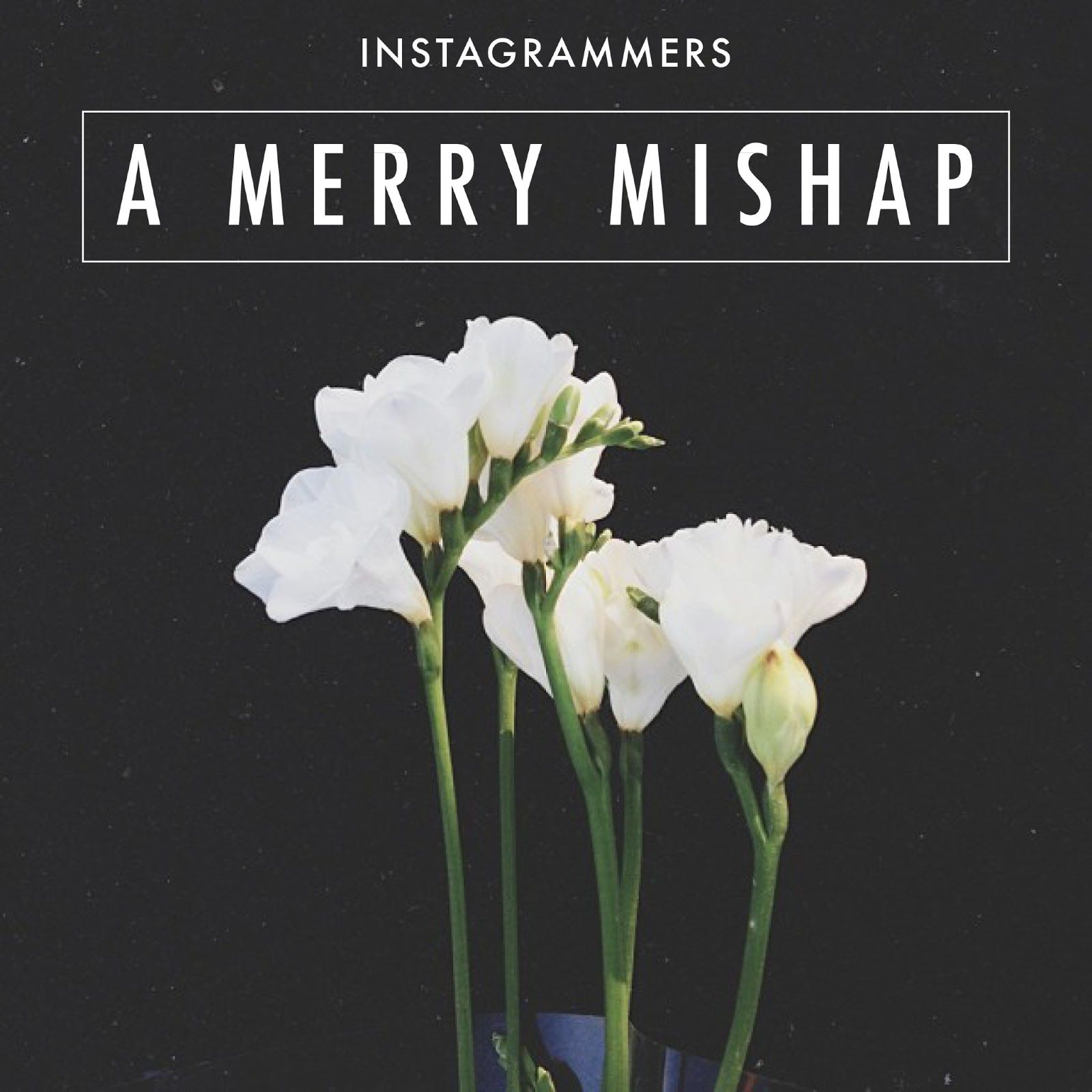 SQUARED PERFECTION #2 /a merry mishap on instagrammers