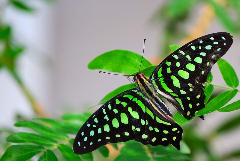Beautiful green Butterfly picture