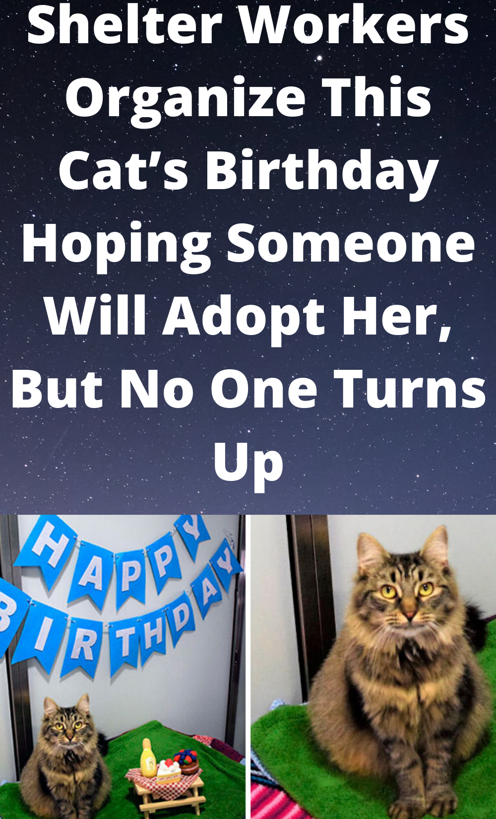 Shelter Workers Organize This Cat S Birthday Hoping Someone Will Adopt Her But No One Turns Up In 2020 Cats Adoption Cat Birthday