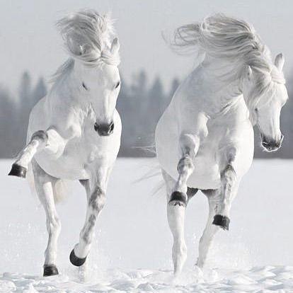 Dancing in the snow . #horse #horses #cheval #pferd… – T Buillon