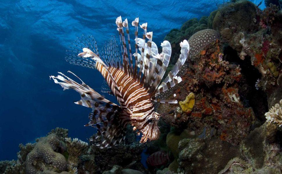 imax under the sea 3d 1080p