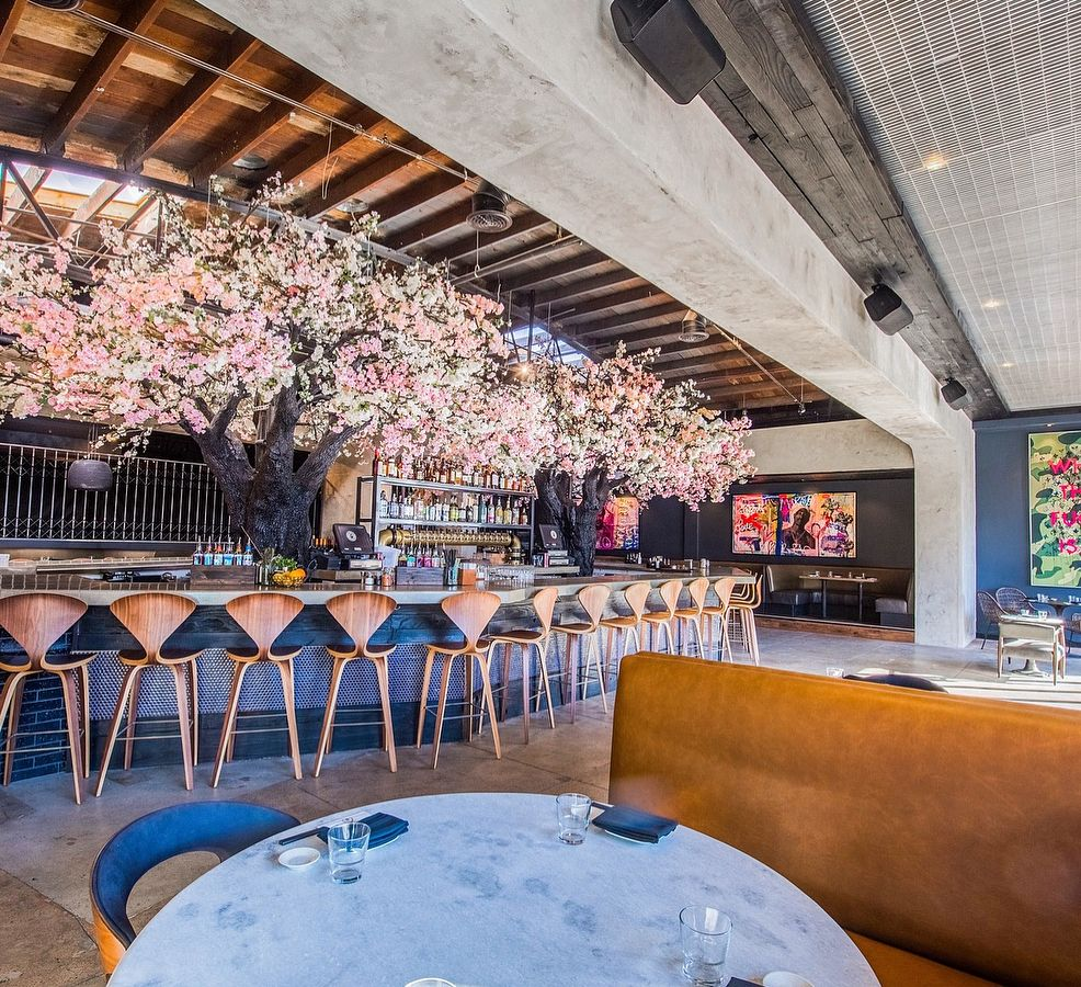 Cloak Petal San Diego Usaa Giant Cherry Blossom Tree Sets The Scene For High End Japanese Small Plate Cherry Blossom Tree San Diego Usa Creative Cocktail