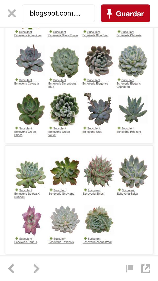 Types Of Succulents Succulent Names Succulents