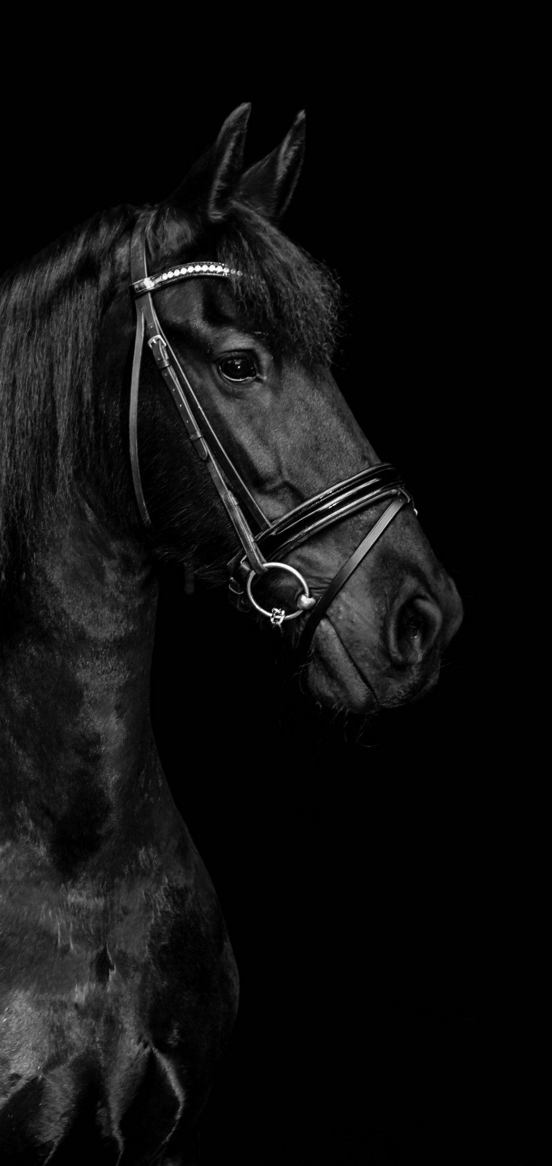 Black Horse Wallpaper Horses Horse Wallpaper Black Horse Wallpaper