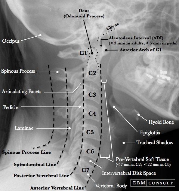 Pin de Nail Mirsaitov en || Human anatomy | Pinterest | Medicina ...