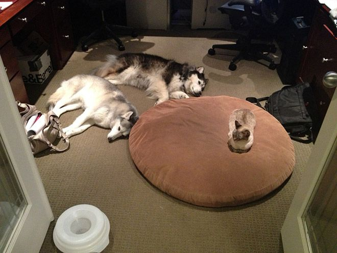 Dog Beds Stolen by Cats