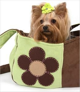 Dog Carriers Yorkies Dog And Yorkshire Terrier