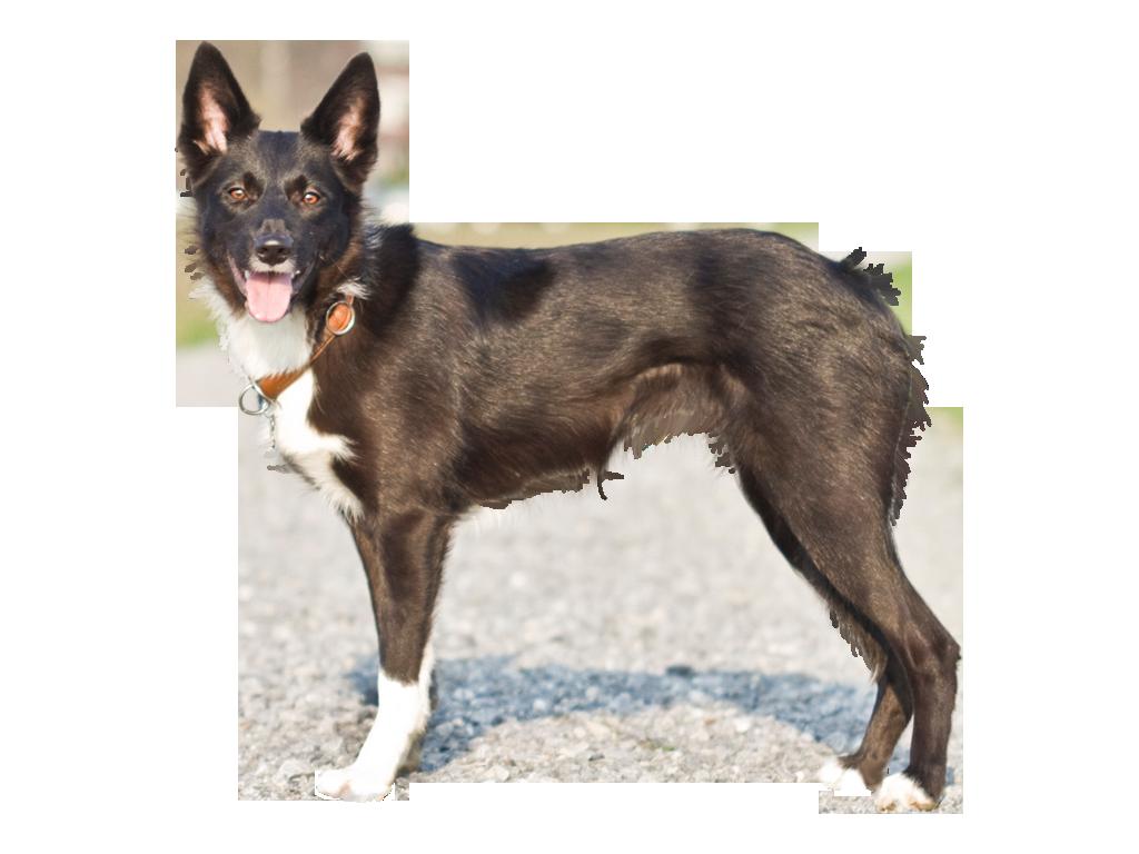 Hündinnen | Hunde, Border collie, Collie