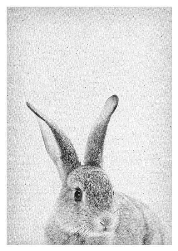 Rabbit print peekaboo rabbit rabbit wall art rabbit poster
