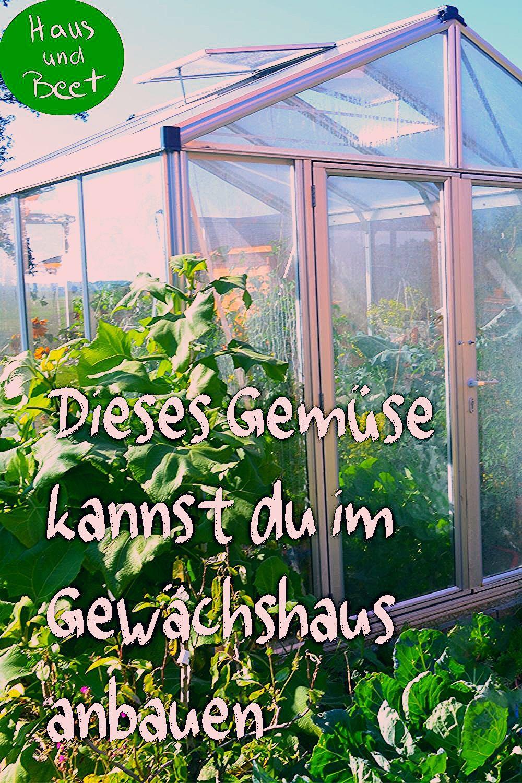 Photo of Gemüse anbauen im Gewächshaus – Was ist empfehlenswert? – Haus und Beet